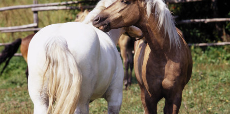 IZOSOFT'S imageDisk Horses IZ063