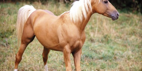 IZOSOFT'S image Disk Horses IZ063